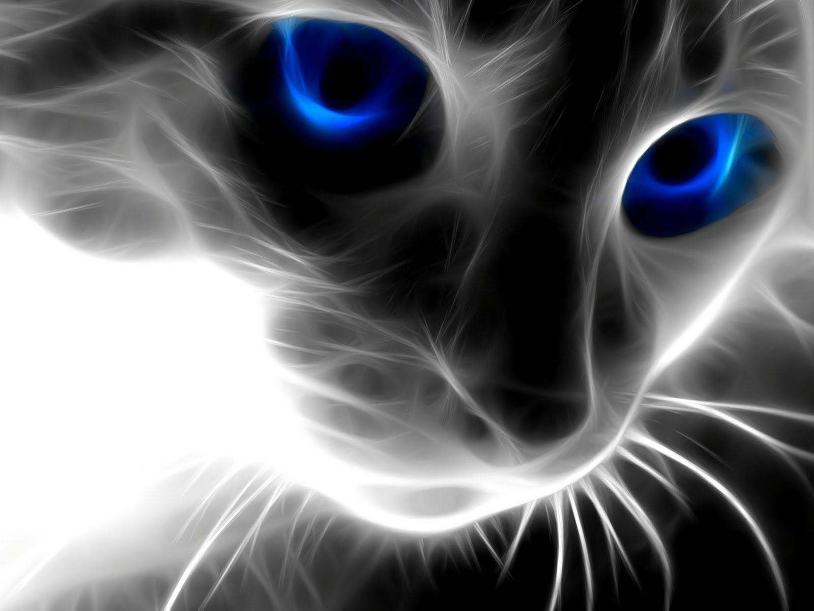 Magic_Cat_wallpaper_windows_7.jpg