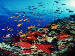 'Tropicalización' de la biodiversidad