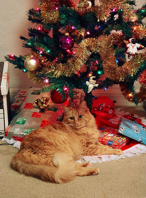 cats celebrating christmas damn cool pictures