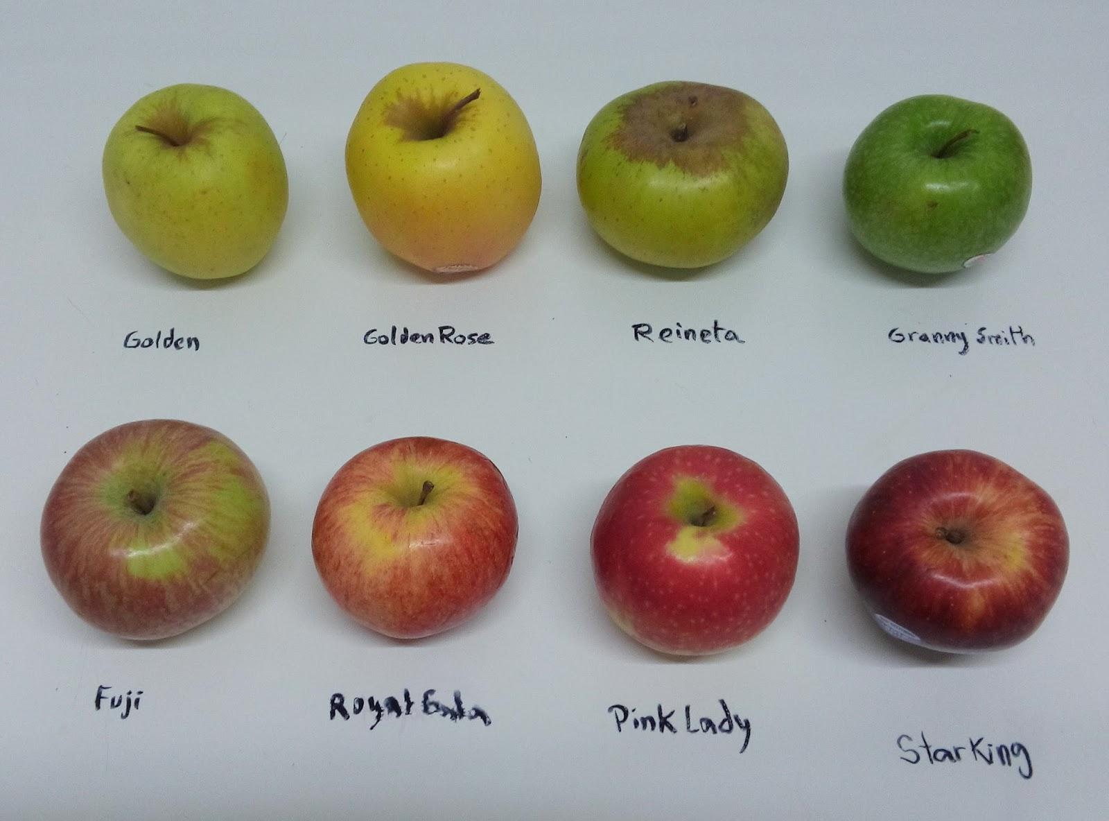 8 manzanas comparativa y evocaci n a vinos blancos - Pure de castanas y manzana ...