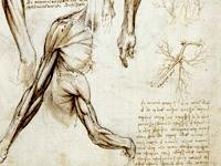 Planche anatomique de Leonard de Vinci