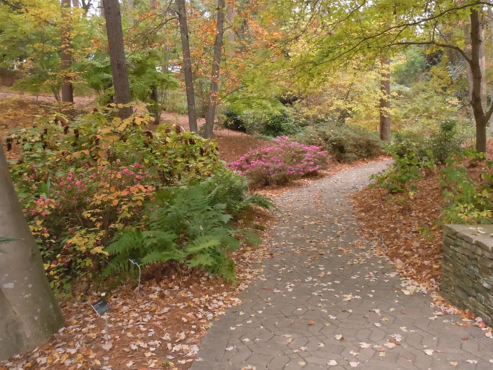 S.C. Botanical Garden | Nature spots