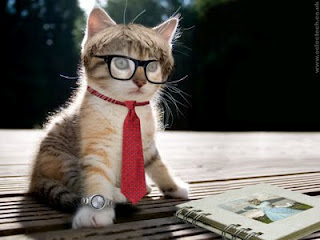 Gambar_lucu_Kucing_pintar