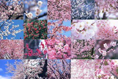 Flores de Primavera I (20 imágenes muy lindas)