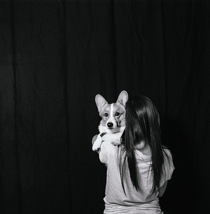 corgi black backdrop portrait photography