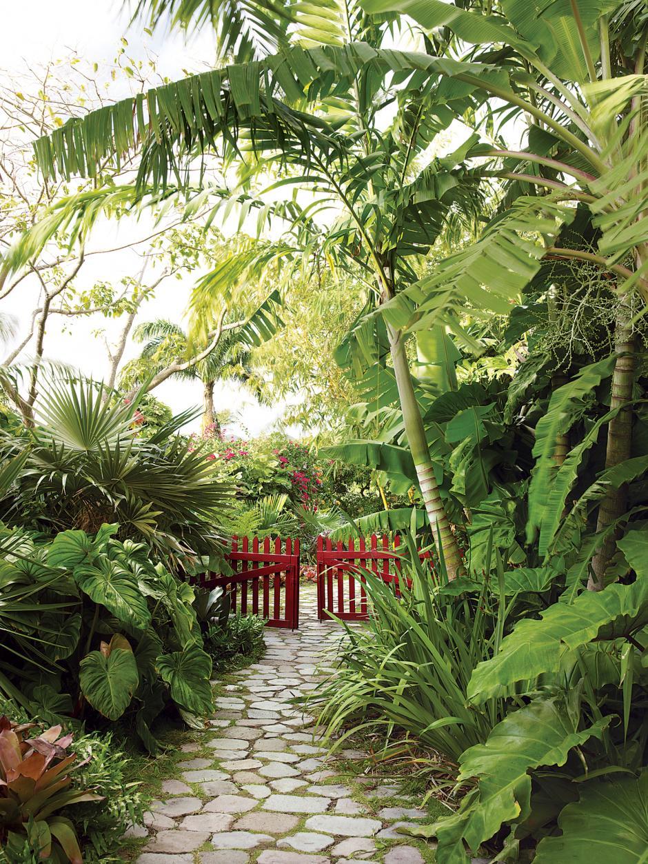 La cyca jardiner a dise o de jardines el jard n tropical for Jardin tropical plantas