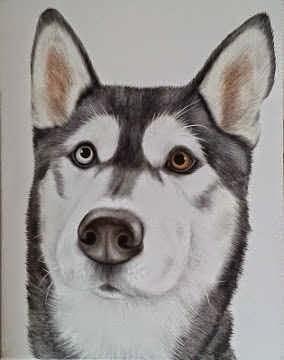 Sparky the Husky Dog