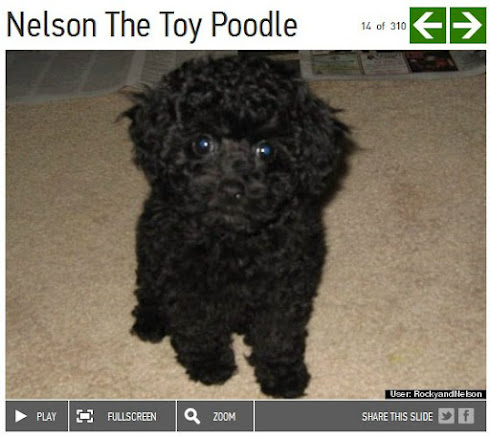 Nelson was featured on The Huffington Post