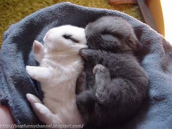 Two cute bunny.