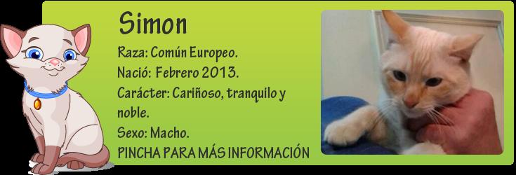 http://mirada-animal-toledo.blogspot.com.es/2014/02/simon-gato-tirado-en-la-calle.html