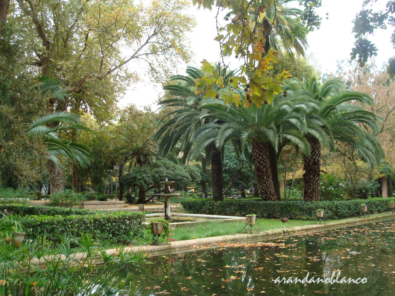 Plataforma ciudadana parques y jardines sevilla un comienzo for Jardines con palmeras