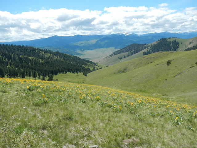 mission mountains wildflower meadow bison range montana