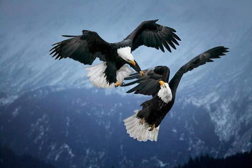 Águilas cristianas - Imagui