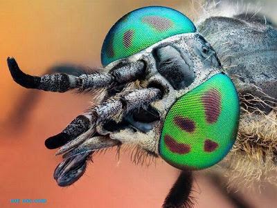 http://bambang-gene.blogspot.com/2011/07/foto-serangga-yang-indah-dan_11.html