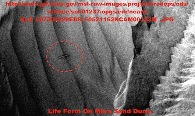 Armored Worm Found In Mars Sand Dune In Rover Photo UFO%252C%2BUFOs%252C%2Begyptian%252C%2Bsightings%252C%2BKylo%252C%2BBB8%252C%2BForce%2BAwakens%252C%2Barchaeology%252C%2B101%252C%2BEnterprise%252C%2Bastronomy%252C%2Bscience%252C%2BStargate%252C%2BBill%2BGates%252C%2Bnano%252C%2Btech%252C%2Bovni%252C%2Bomni%252C%2Bworm%252C%2BJustin%2BBieber%252C%2BMars%252C%2Blight%252C%2Bholy%252C%2Bbible%252C%2BObama%252C%2Balien%252C%2BDOE%252C%2B114