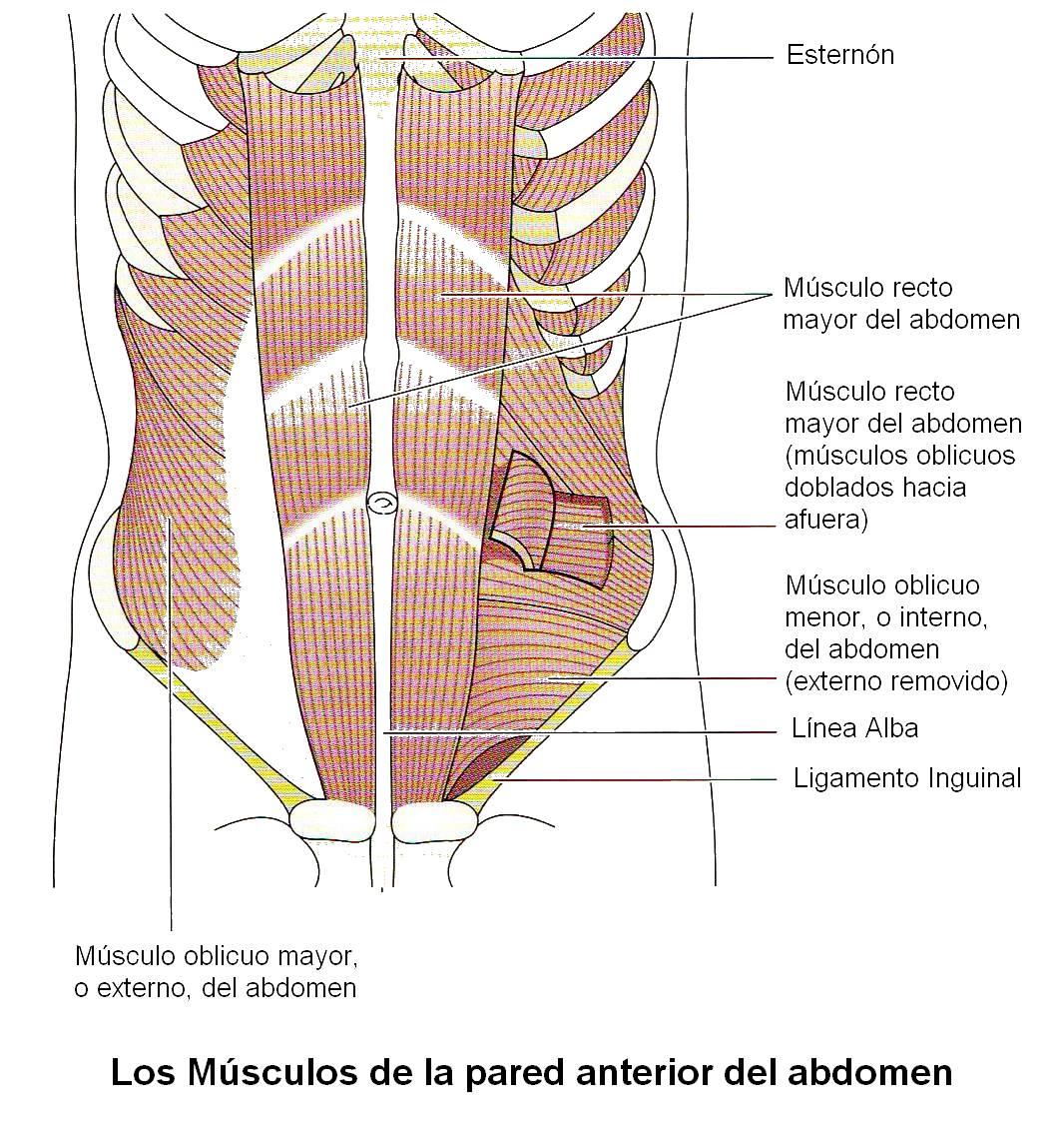 Entrenando Con Borja: Conocimientos Básicos de Anatomía