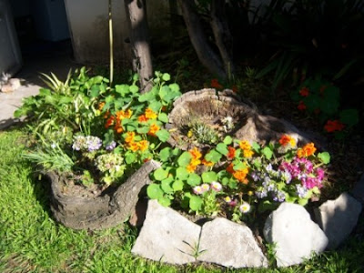 Condimenta tu jardín