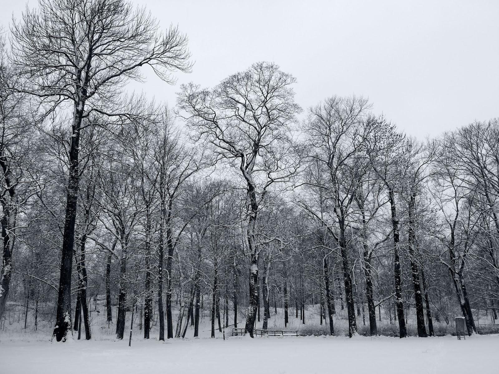 Karlbergs Slottspark, Stockholm, Sweden     Snowy contentment on afeathery*nest     http://afeatherynest.com
