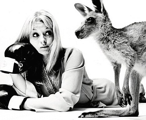 Avengers In Time 1966 Television Skippy The Bush Kangaroo
