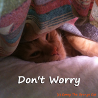 Corey The Orange Cat - Don't Worry