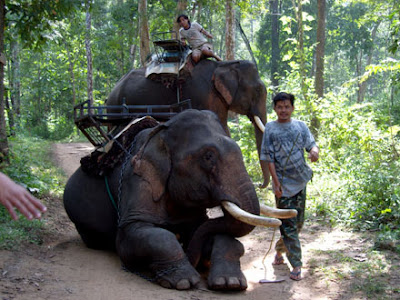 elephant pics