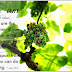 John 15:5 The Vine Bearing Fruit