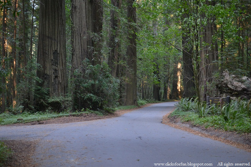 blogs photos redwoods national park forests humbloldt county usa nature travel photography america