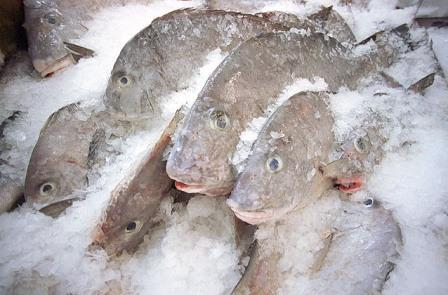 Chenhui company frozen seafood for Best frozen fish