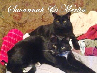 Merlin and Savannah