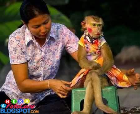 foto lucu Monyet Yang Cantik