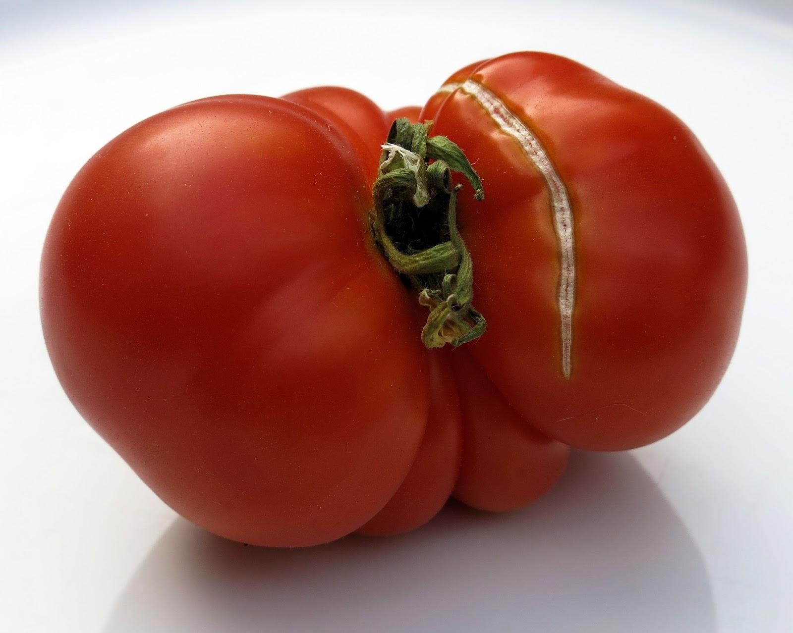 Tomato marmande agm seeds d t brown vegetable seeds - Tomato Marmande Agm Seeds D T Brown Vegetable Seeds Marmande Type Multi Locular Cordon Supplier Franchi