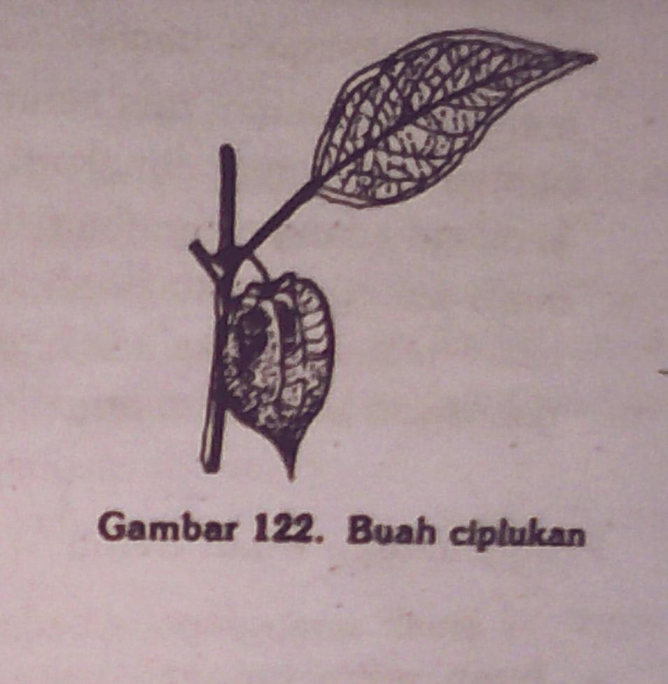 Tugas juni 2015 tenda bunga dan ibu tangkai pada bunga najemuk pada pohon nangka artocarpus integra misalnya ibu tangkai bunga dan semua tenda bunga pada bunga majemuk ccuart Image collections