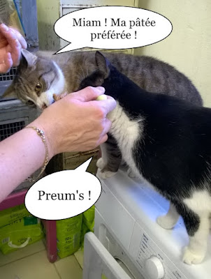 Deux chats lèchent une cuillère de pâtée.