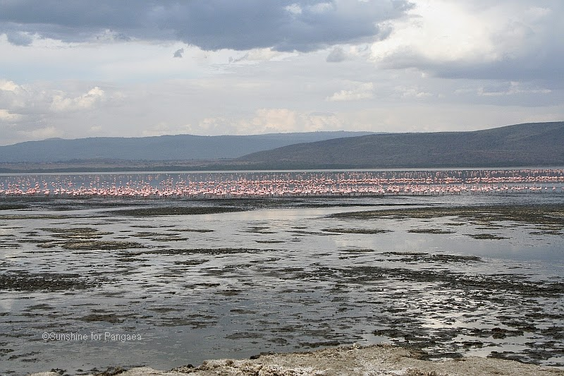 lake nakuru panoramic view