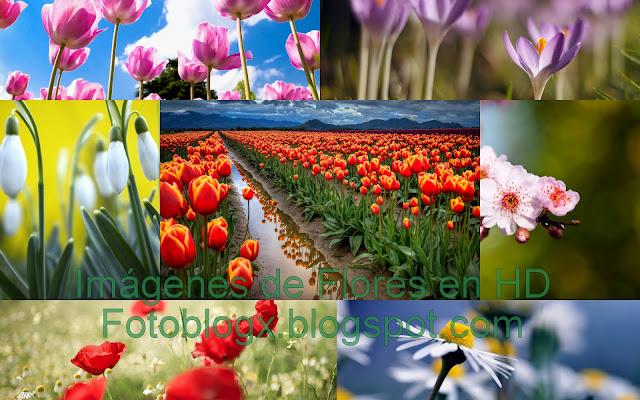 Imágenes de Flores en HD