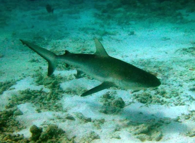 Balıklarda yüzme kesesi hakkında bilgi