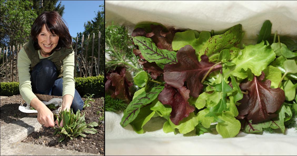 Ma premi re cueillette dans le jardin potager for Blog jardin potager