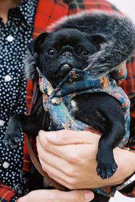 pug, dog fashion, street style, vanessa jackman
