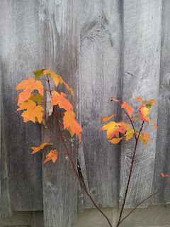 Leaves against the barn