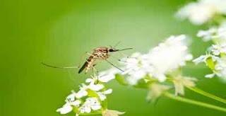 alasan nyamuk menggigit