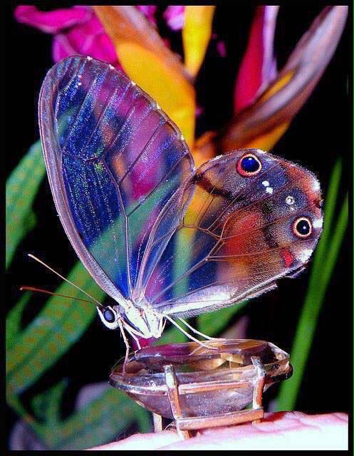 Butterfly Sitting On Diamond Images