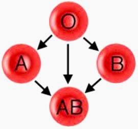 Tes Jenis Golongan Darah ( Golongan Darah A, B, O dan AB )