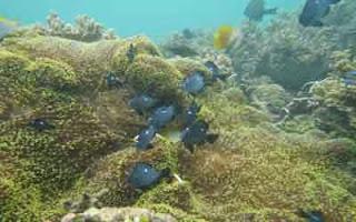 Pulau Segajah : Pulau Unik Di Bontang
