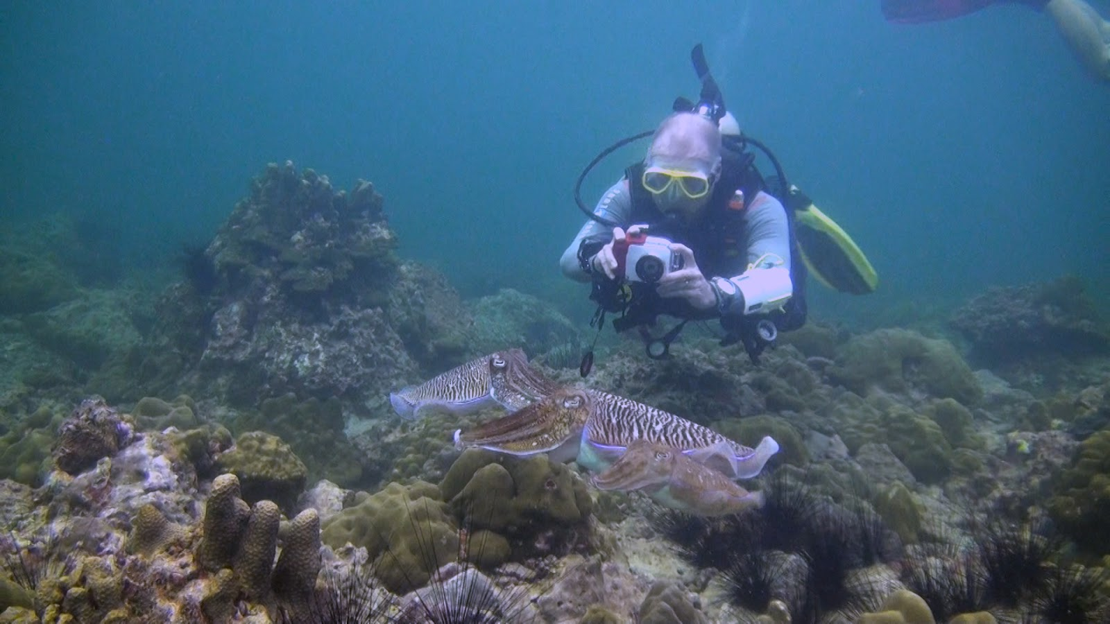 We are a padi 5 star national geographic scuba diving center located in phuket thailand we - Where to dive in thailand ...