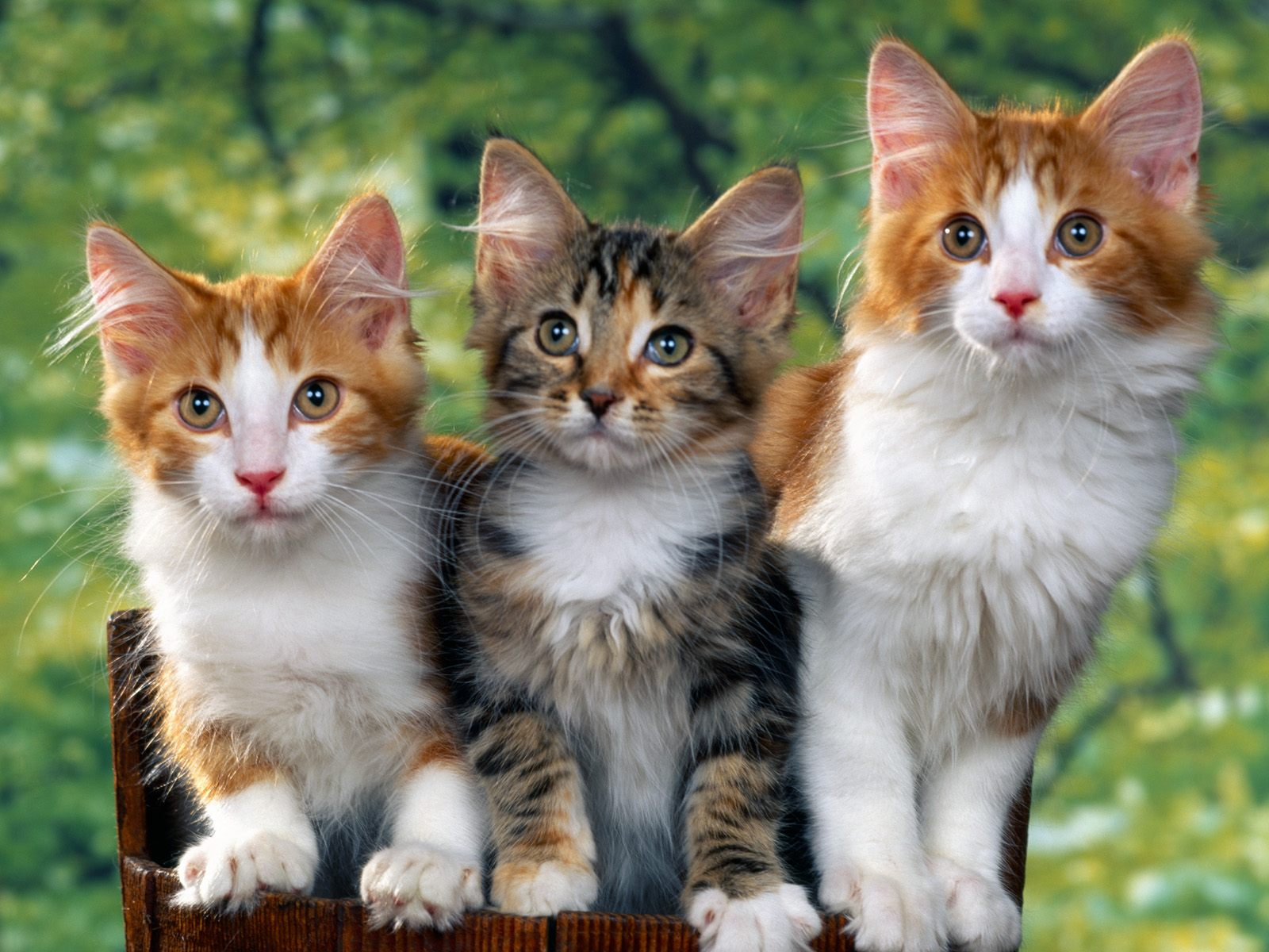 Cat Wallpaper Cute Dog And Funny Love Wall Papers Hd Wallpapers Puppies Backgrounds For Boys