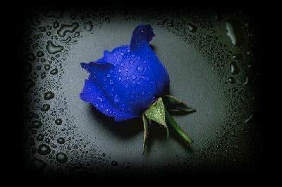 Kumpulan Gambar Bunga Mawar Indah | Diary Apipah