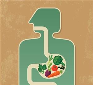 Meningkatkan Kesehatan Organ Pencernaan