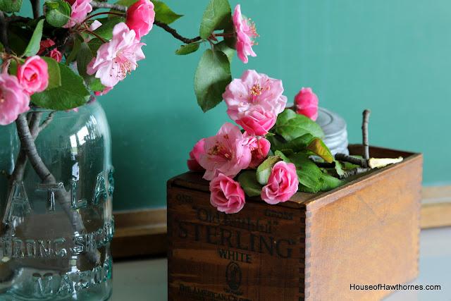 Crabapple blossoms @ houseofhawthornes.com