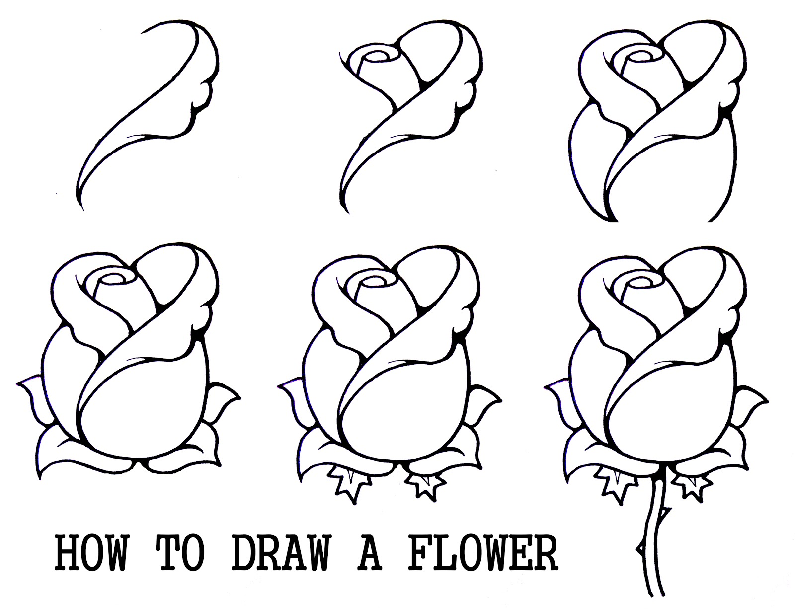 Daryl hobson artwork how to draw a flower step by step for Things to draw for beginners step by step