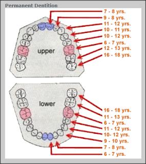 dentition order permenent
